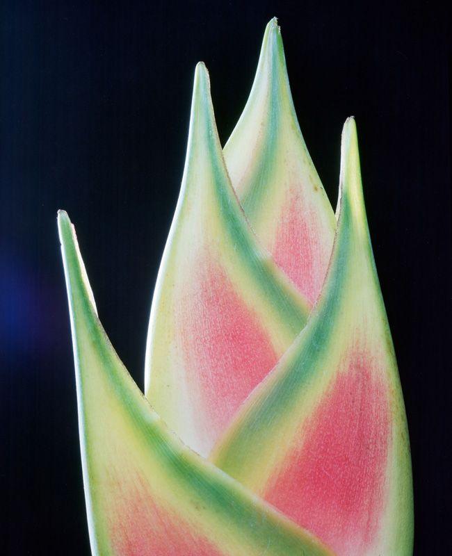 Alejandro Kuropatwa - Colección Flores