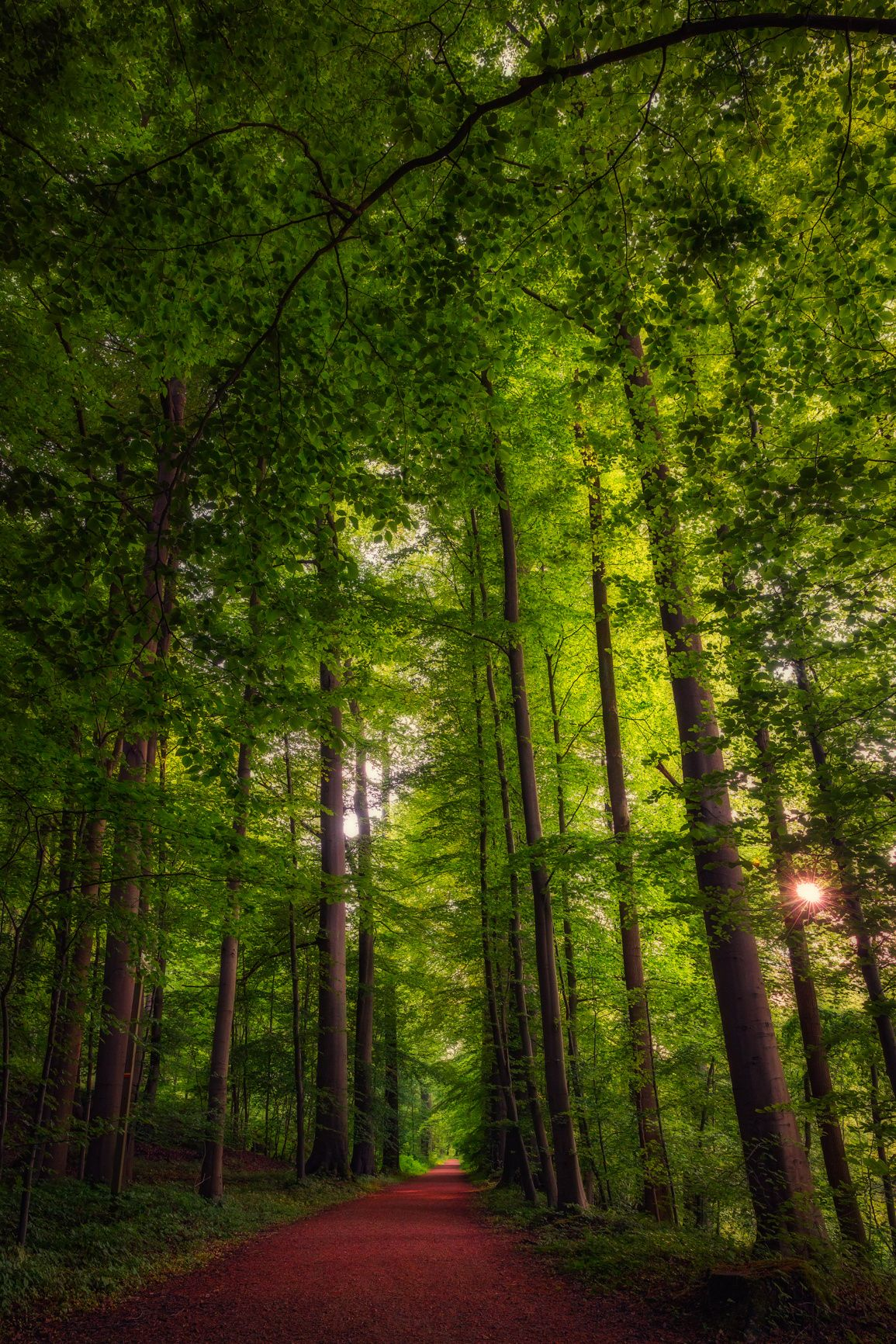 Forest path by Jean-Francois Chaubard on 500px