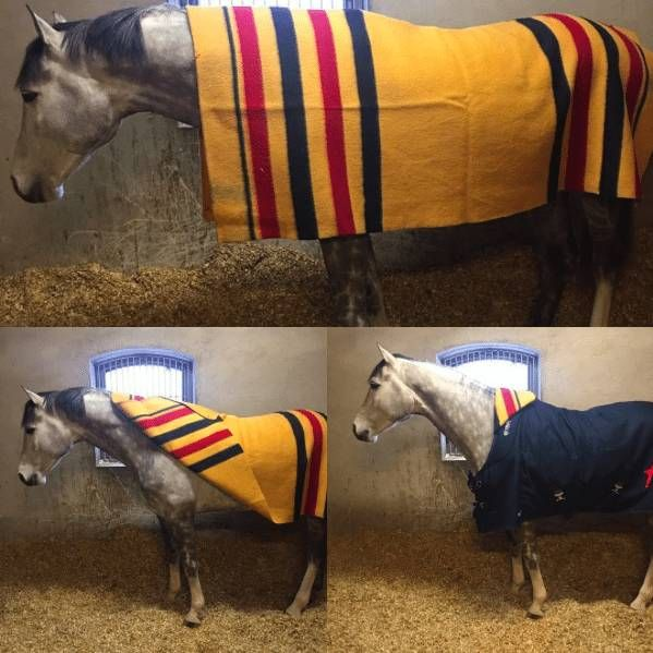 Getthegallop Newmarket Blanket Fold I M Country Blessed