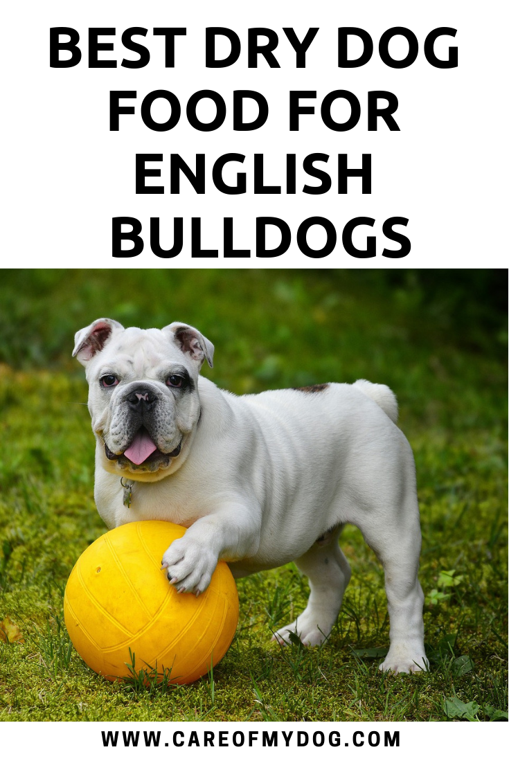 Best Dry Dog Food for English Bulldogs (With images