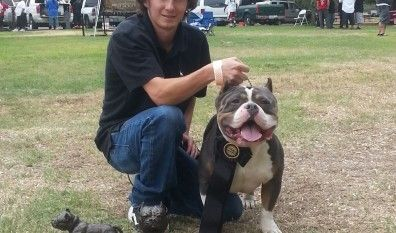 Grand Champion Beastro Wins 42 In San Diego American Bully