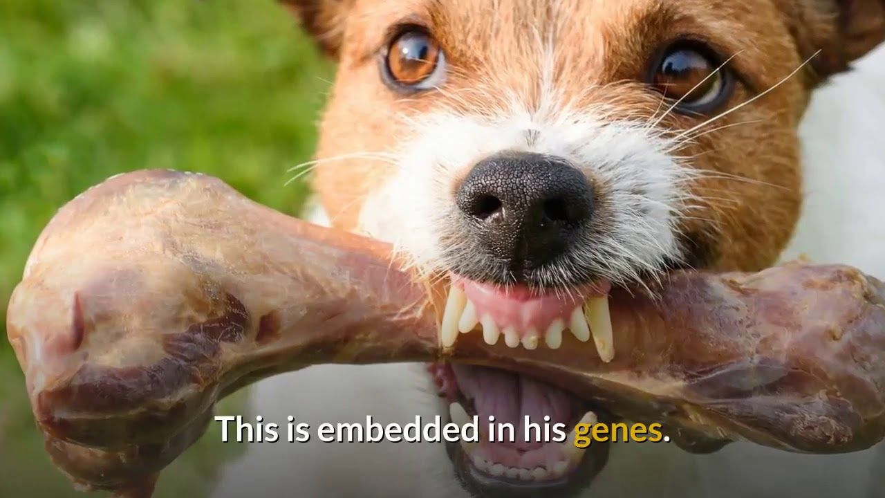 How to solve food aggression in dogs food aggression