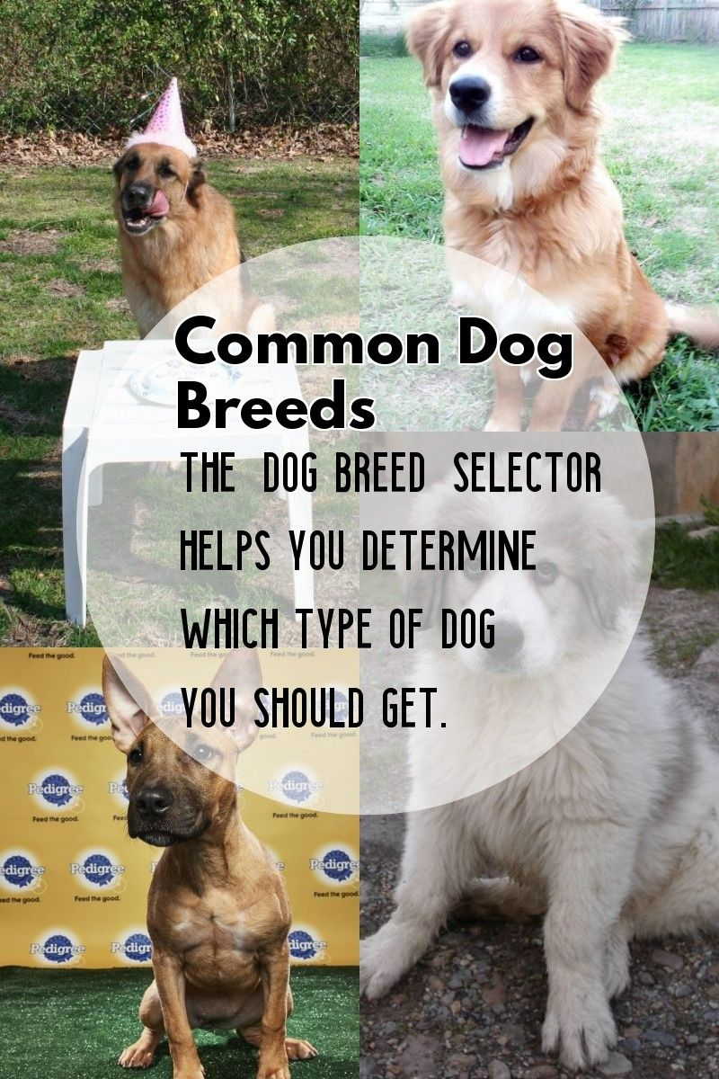 5 Dog Breeds That Are Widely Renowned Around The Globe Dog