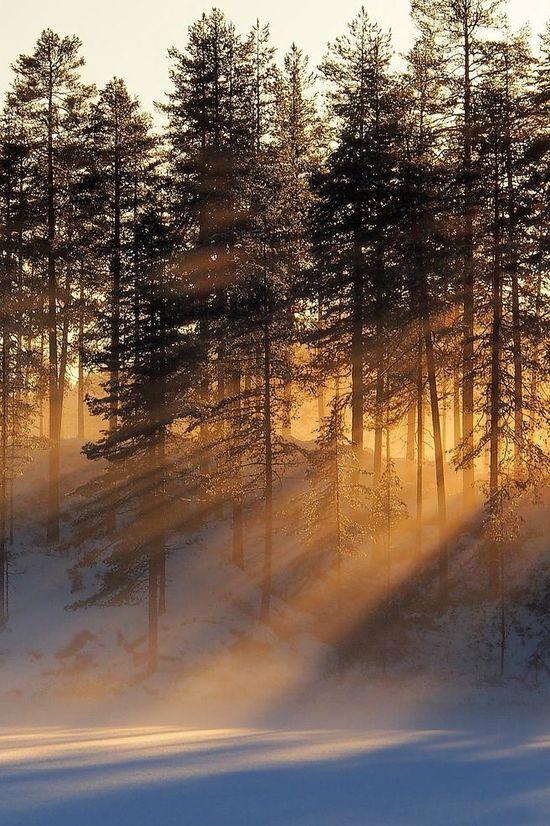 Thru the pines