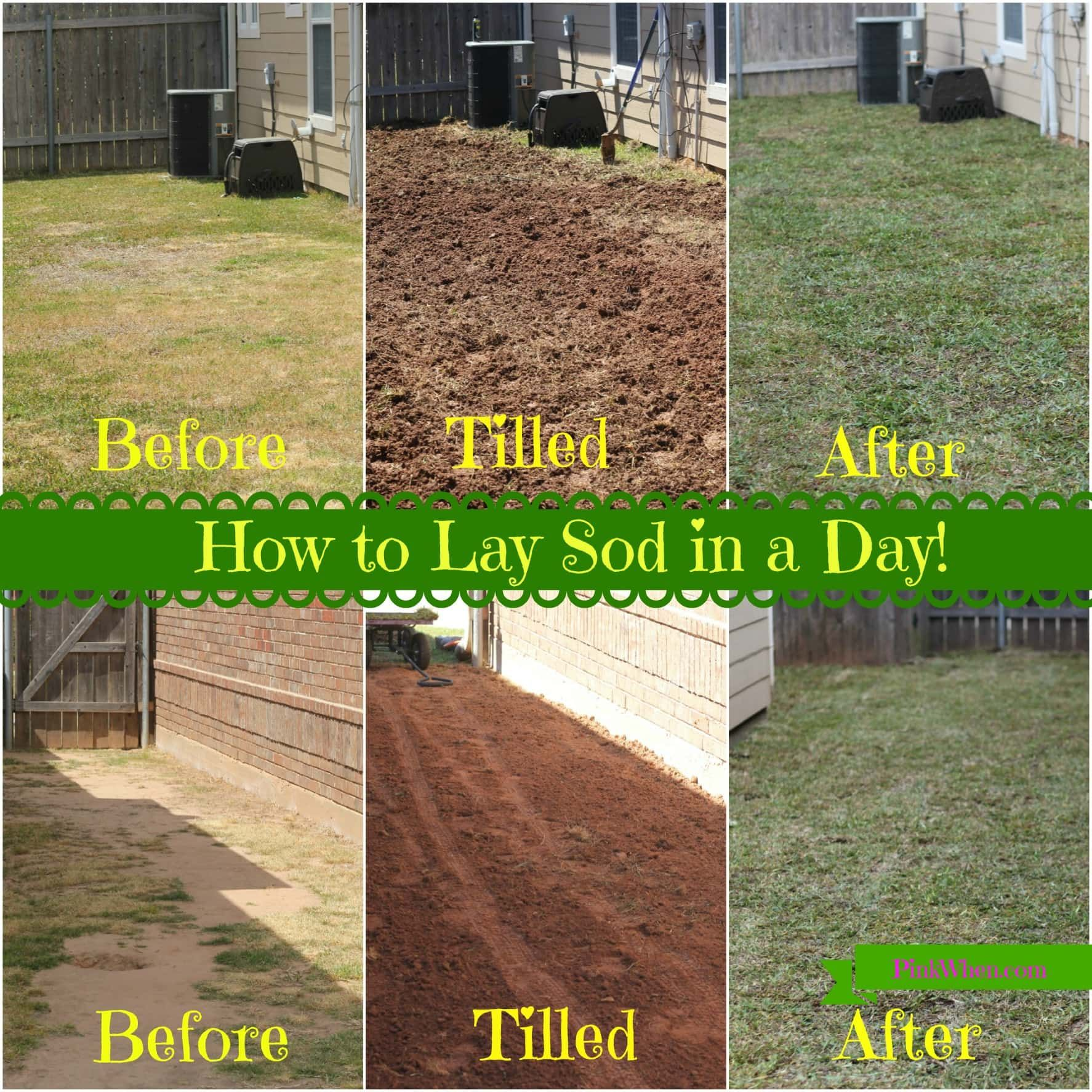 How To Sod Your Yard Installation Lay Backyard