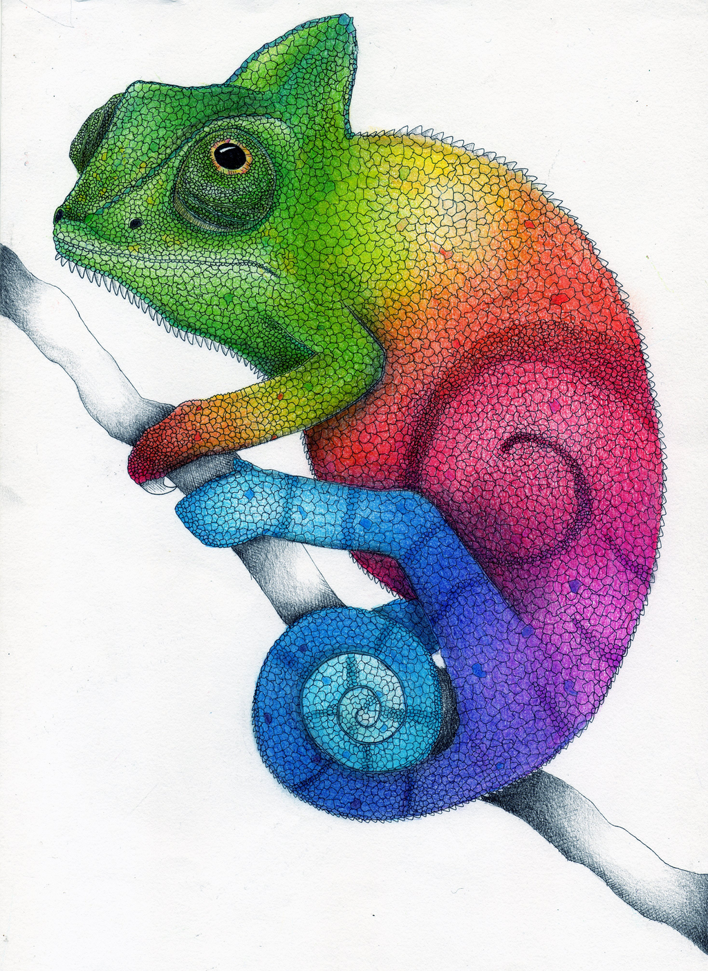 Rainbow Chameleon Color Pencil Drawing by Karen754 on
