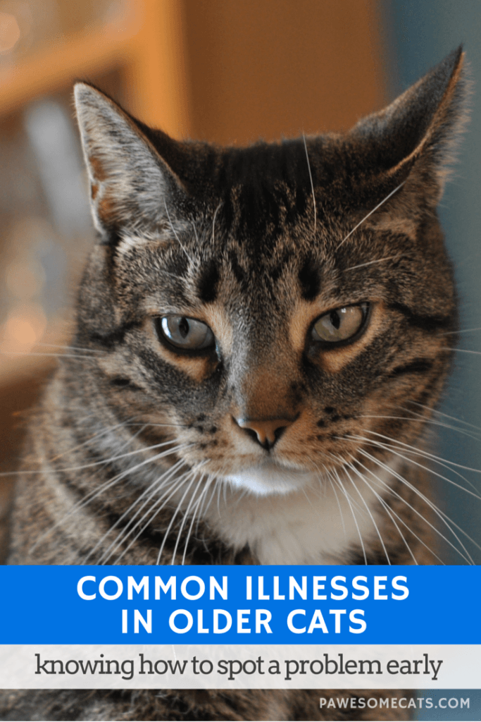 Common Illnesses Older Cats are More Likely to Experience
