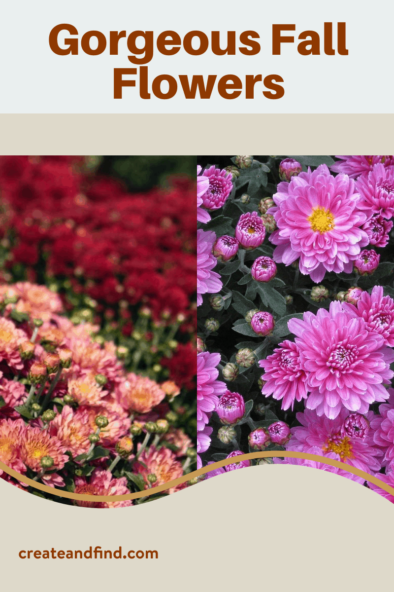 Fall Flowers To Plant For Gorgeous Seasonal Color In 2020 Fall Landscaping Fall Flowers Planting Flowers