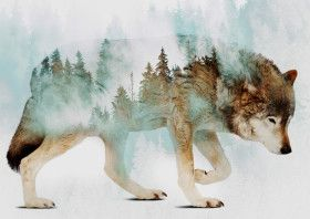 Wolf and Forest 6 | Displate thumbnail