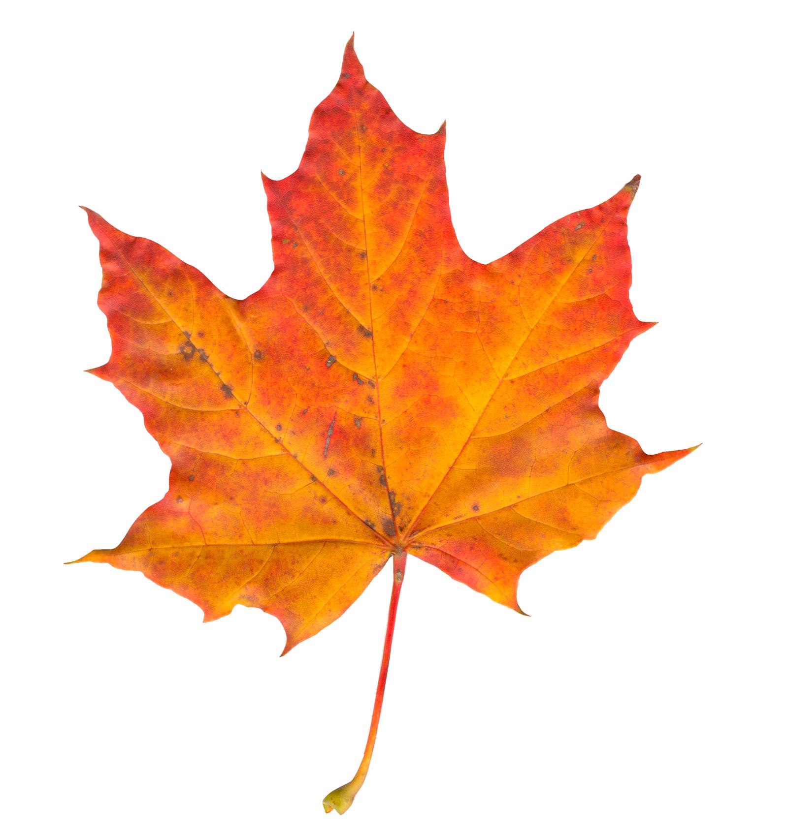 Pin De Eric Huang Em Destaques Folhas De Outono Folhagem Folhas