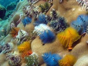 Christmas Tree Worms Animal Facts Animals Weird Animals