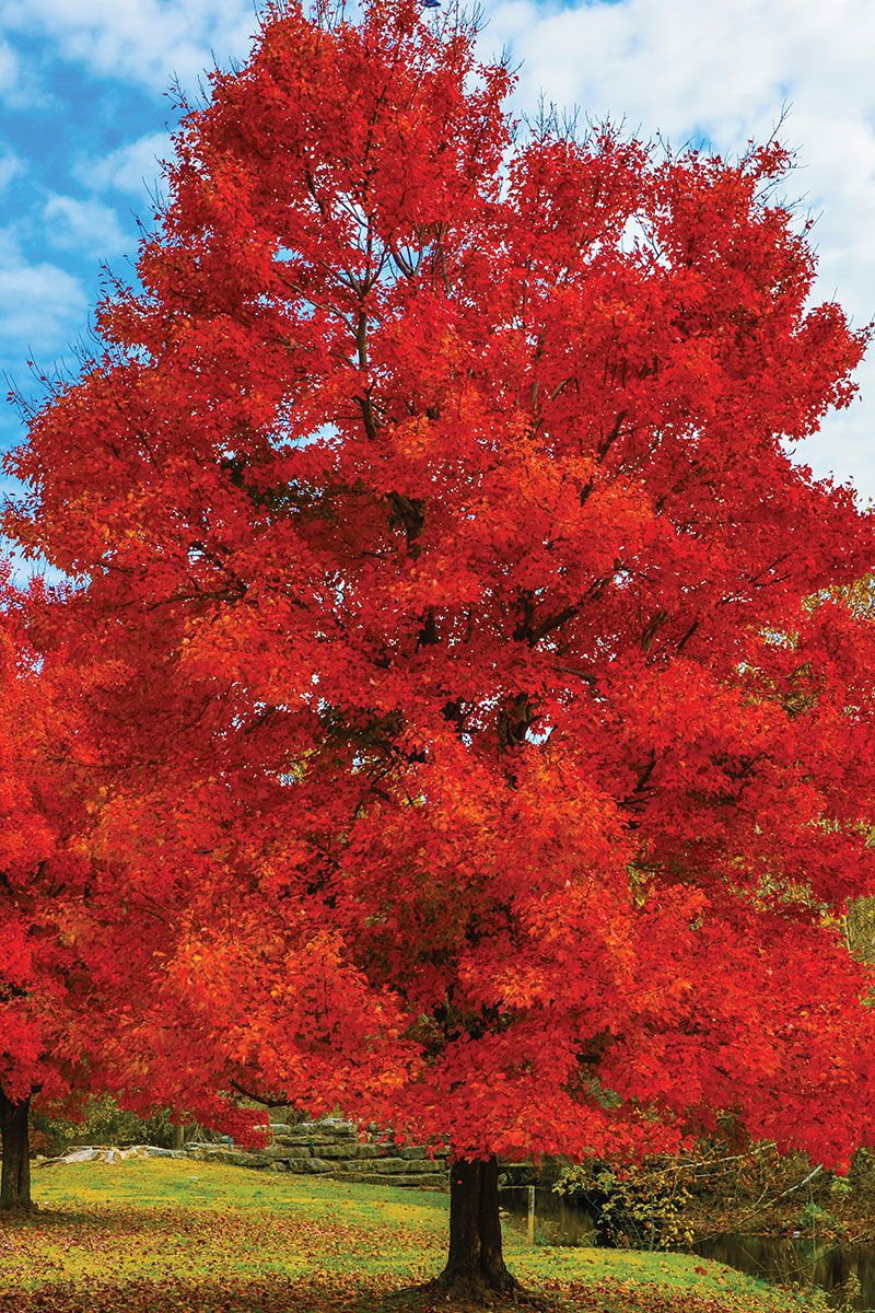 What Oklahoma Proven tree is best for your yard? Tree
