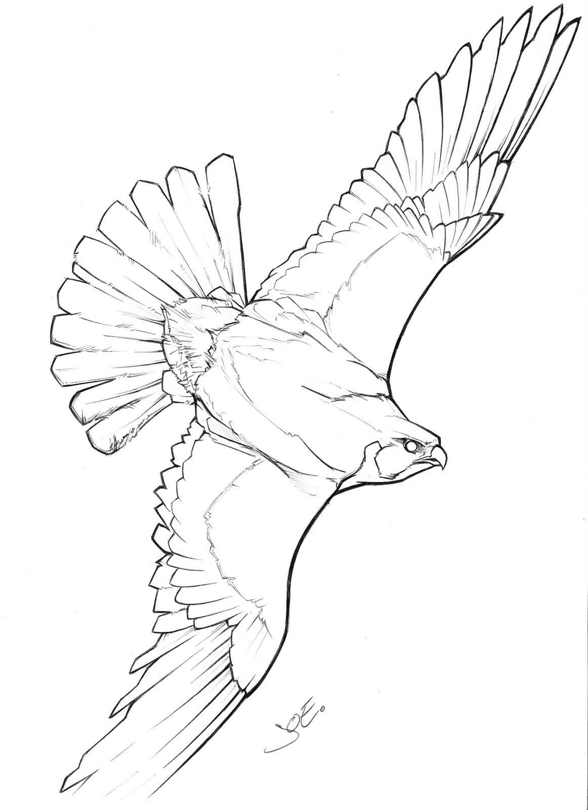flying falcon drawing - HD1162×1600