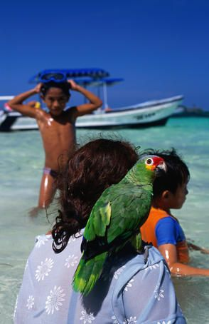 Pet Parrot With Family At Beach Cancun Area Mexico Www Facebook Com Wildcanadasalmon Mexico Travel Mexico Laying On The Beach