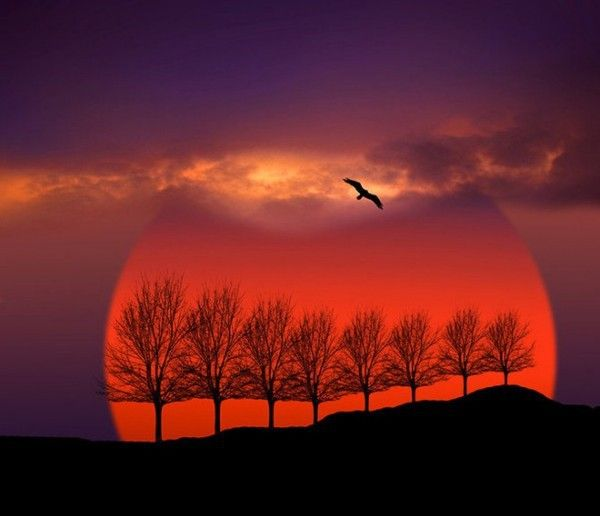 Orange Sun, Lavendar Sky.