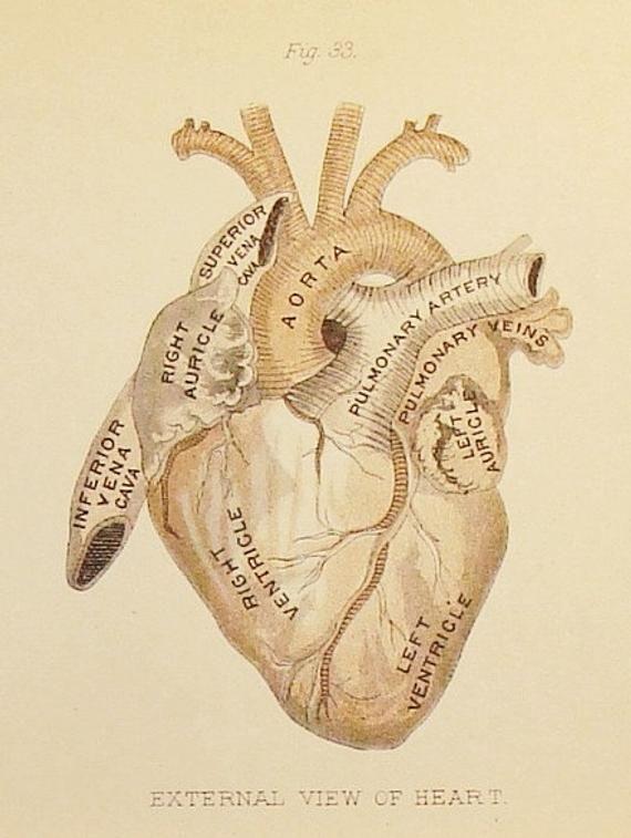 A Cardiac Chronology (Beginning):  27 Heart Anatomies, 14th century-1897