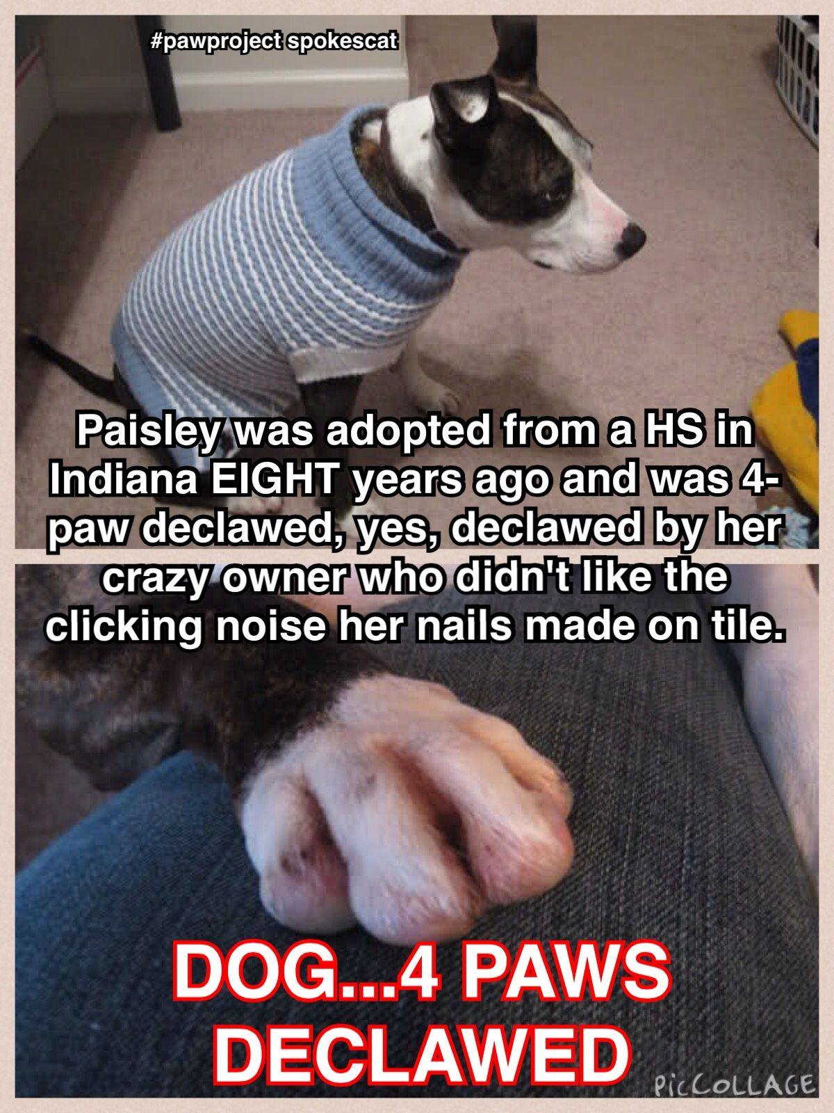 Watch a dog getting #declawed without meds by a #veterinarian. https://www.facebook.com/cassandracatwantsherclawsback/videos/vb.316121541928633/488384818035637/?type=2&theater  #AAFP #CatVets #AVMAvets #AVMA #AVMATellTheTruth #AAHA #AAHAHealthyPets #ACVBbehavior #StopDeclawingCats #BoycottVetsWhoDeclaw #StopLegalAnimalCruelty #DeclawedCatsAreInConstantPain #VetEconFact #NYSVMS #GreedOverCompassion #AVMAhatesPETS #Declawing