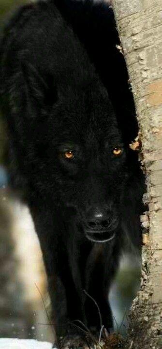 Lucas y wolf