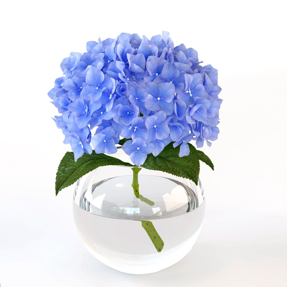 Открытки с синими цветами фото, открытку деньгами трудоголик