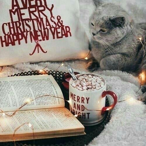 Image de christmas, book, and cat