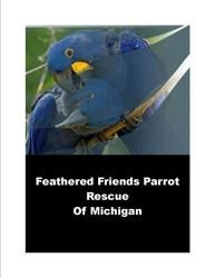 Supporting Rescues By My Safe Bird Store Parrot Rescue Rescue Bird Store