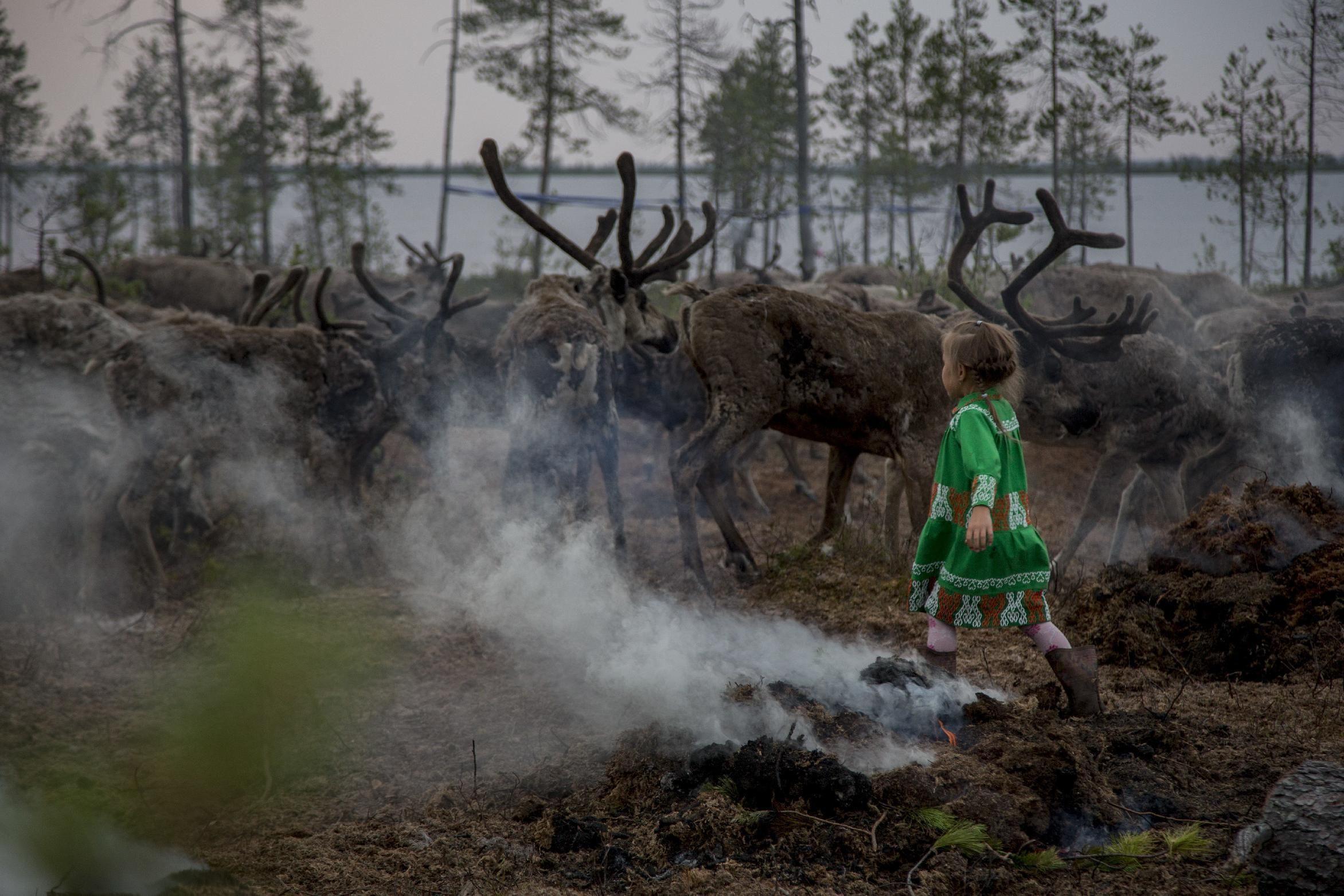 SALEKHARD, Rusia (AP) — Los indígenas que pastorean renos en la región de Yamal, en el norte de Rusia, una remota zona de Siberia donde las temperaturas suelen bajar de menos 50 grados Celsius en invierno, están familiarizados con los caprichos de la naturaleza.