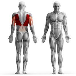braços vistos de costas - Pesquisa Google