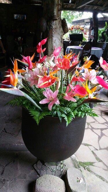 Flowers at El Jardin De Celeste along Ruta de Las Flores in El ...
