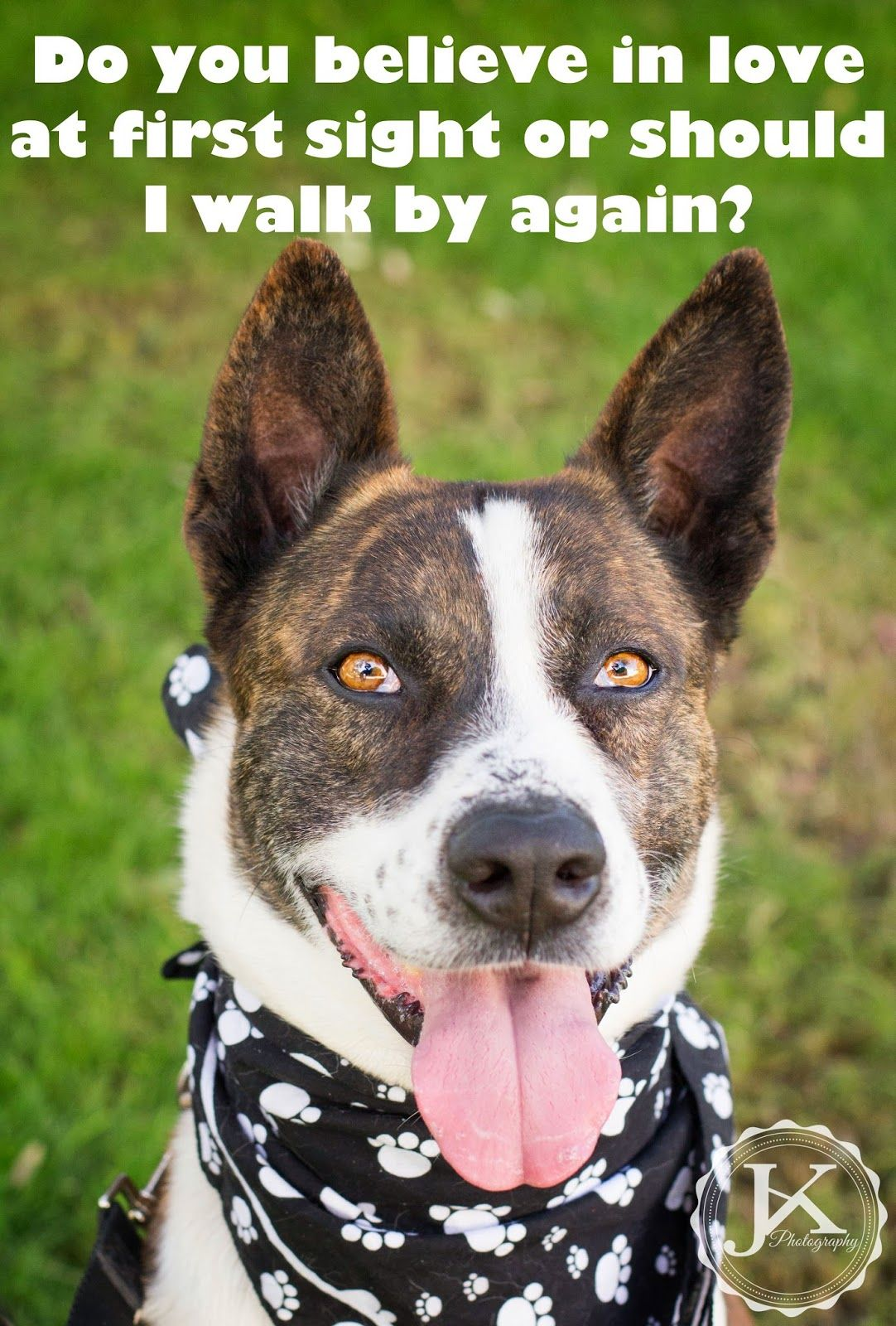 Your Place or Mine? Foster dog, Shelter dog quotes, Dog