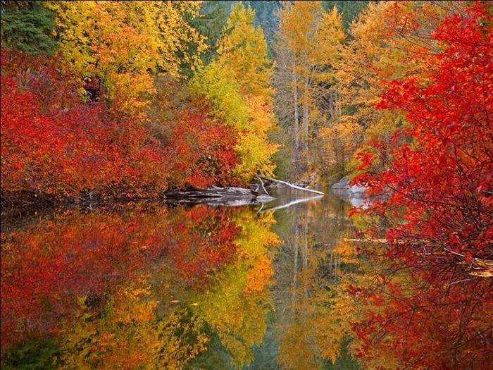 water reflection photos