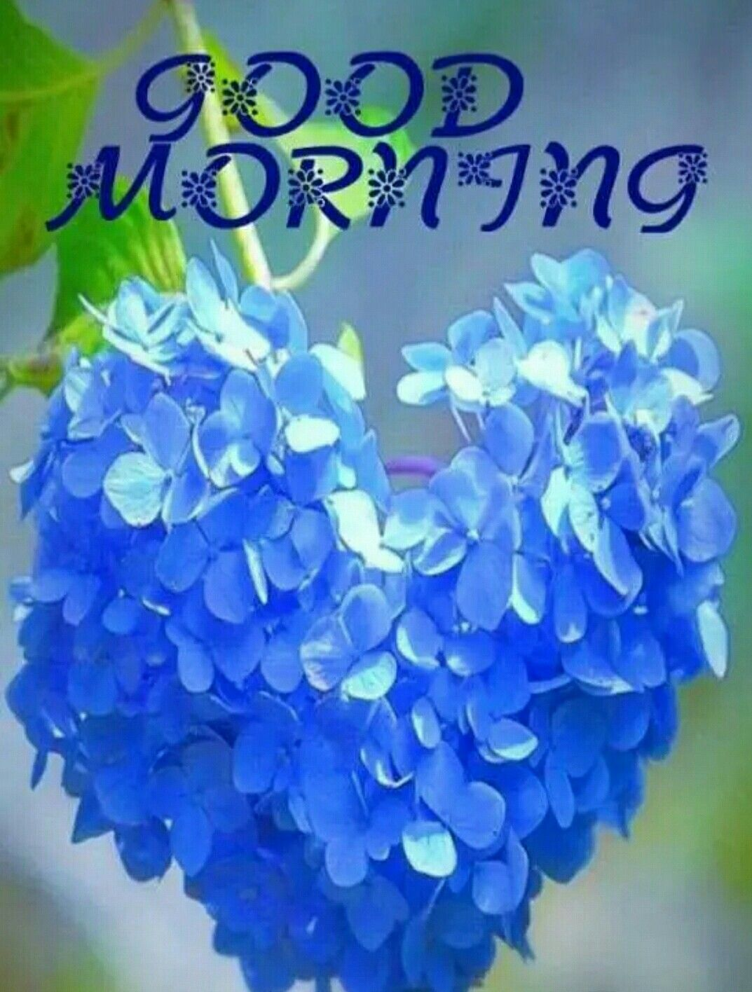 Pin By Marina Otti On Good Morning In 2020 Good Morning Greetings Good Morning Flowers Good Morning Images Flowers
