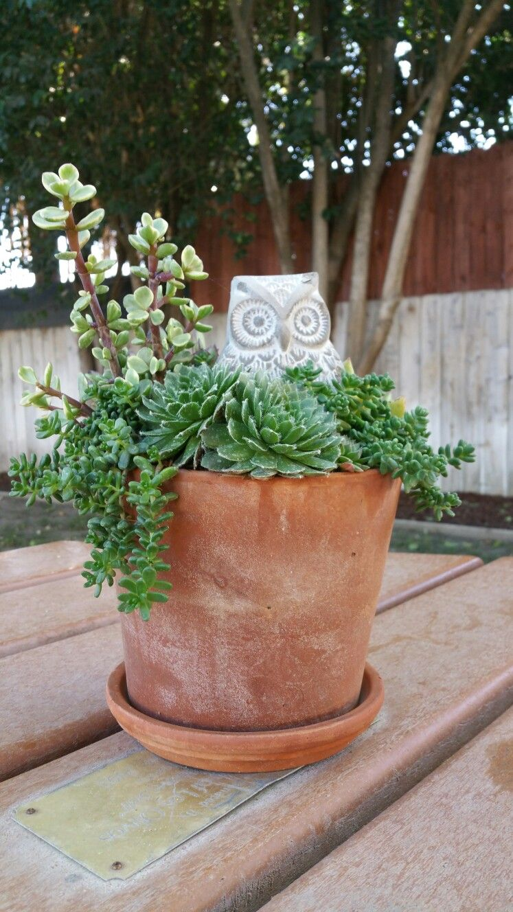 Whoooo's there?! Cute Halloween centerpiece that can cross-over seasons.