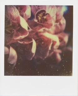 polaroid orchid
