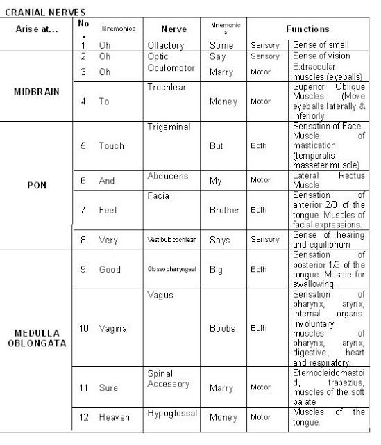 12 Pairs of Cranial Nerves Nerve | # | Function | Test(s) for ...