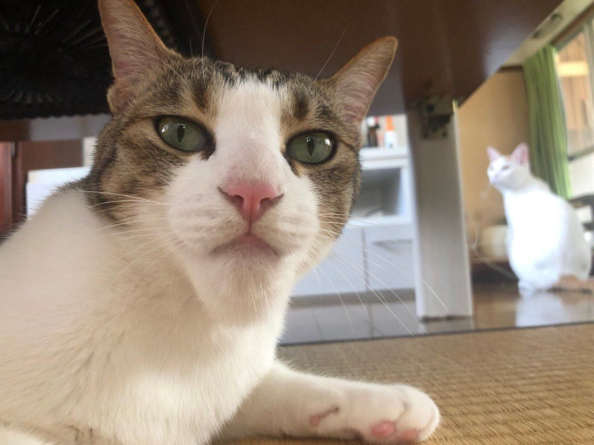 This cat got stung by a bee in its chin. https//ift.tt
