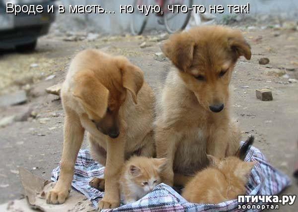 Картинки котят и щенков с надписями