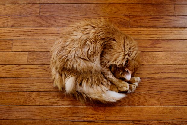 3 Cleaning Mistakes That Are Ruining Your Hardwood Floors