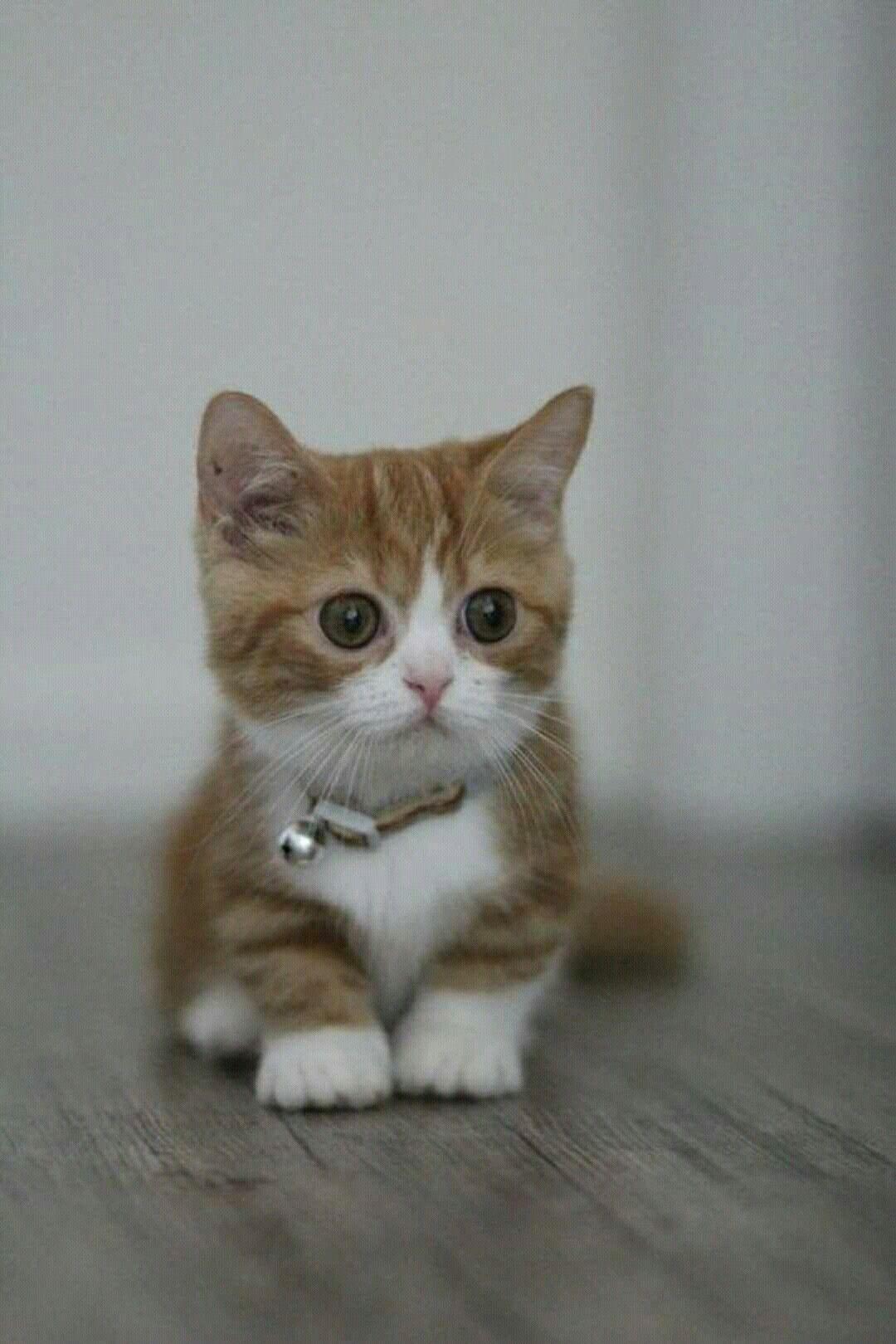 catsandkittensbreeds Kittens Kittens cutest, Cute