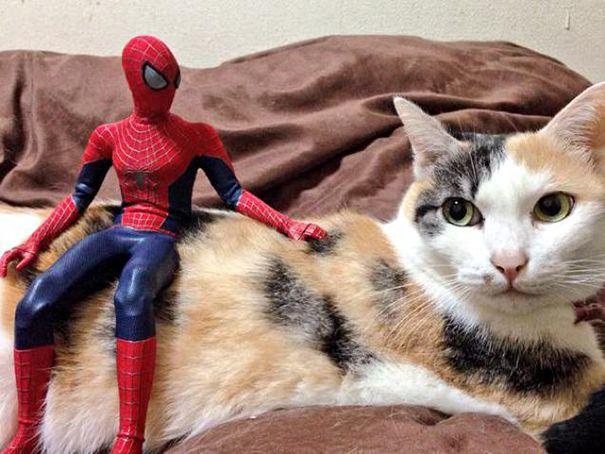 Spider-Man friends.