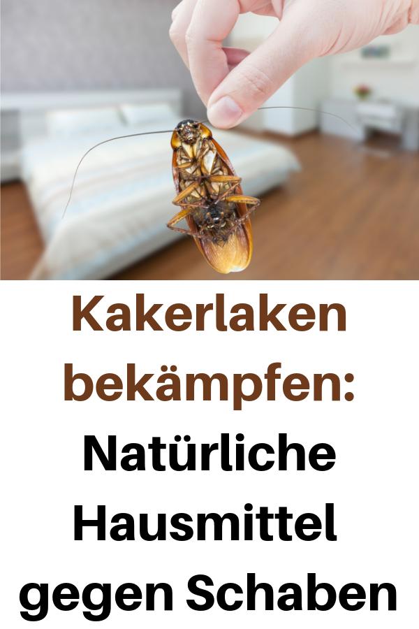 Kakerlaken Bekampfen Naturliche Hausmittel Gegen Schaben Kakerlaken Bekampfen Hausmittel