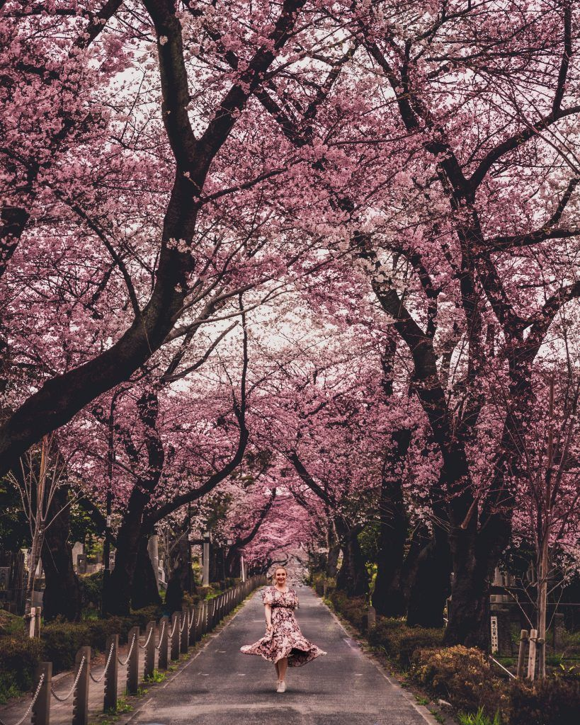 The Best Cherry Blossom Locations In Tokyo Charlies Wanderings In 2020 Places In Tokyo Japan Travel Kyoto Travel