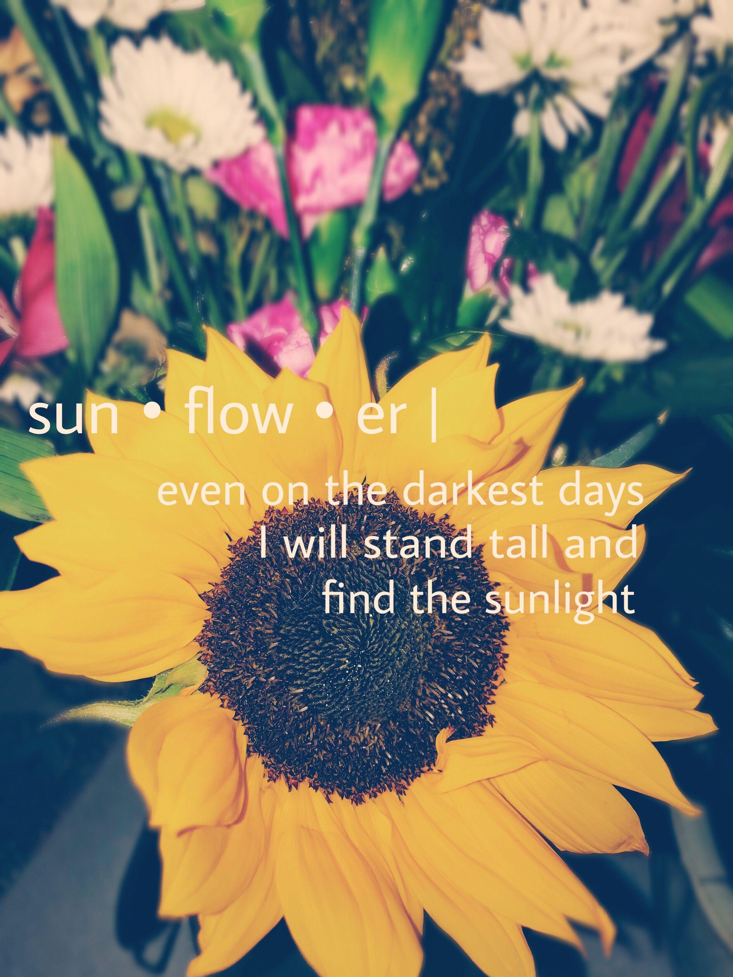 sunflower quotes 🌻  Sunflower quotes, Flower quotes, Cute quotes
