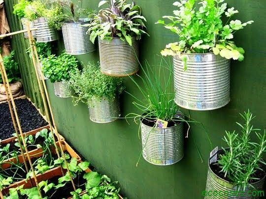 Resultado de imagen para Incluso puedes reciclar las plantas; conserva las raíces de las hierbas y vuelve a Con algo de tierra, abono y tiempo, tendrás tus propios vegetales.