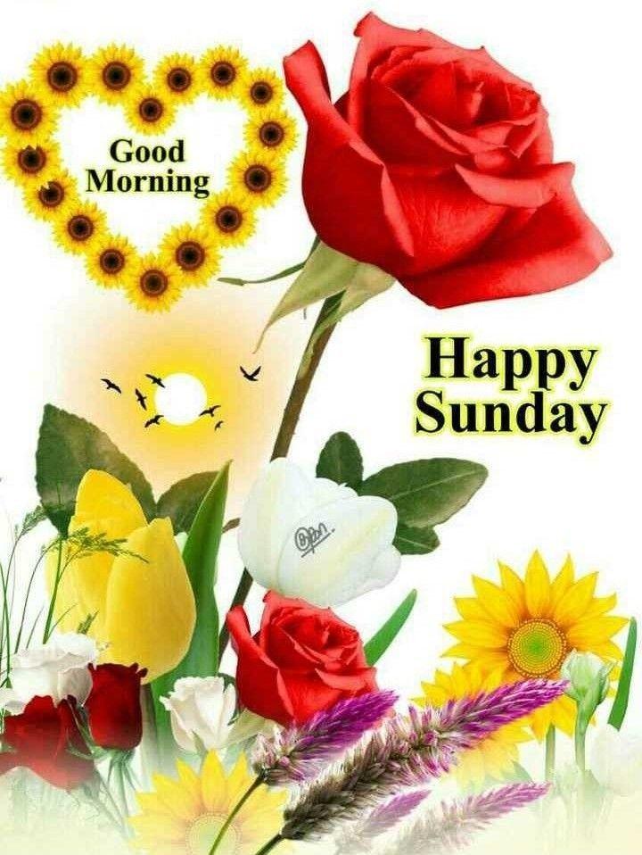 Pin by Archana Sahoo on Happy Sunday Sunday morning