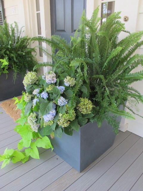 Outdoor Planter With Ferns Summer Planter Porch Flowers Front