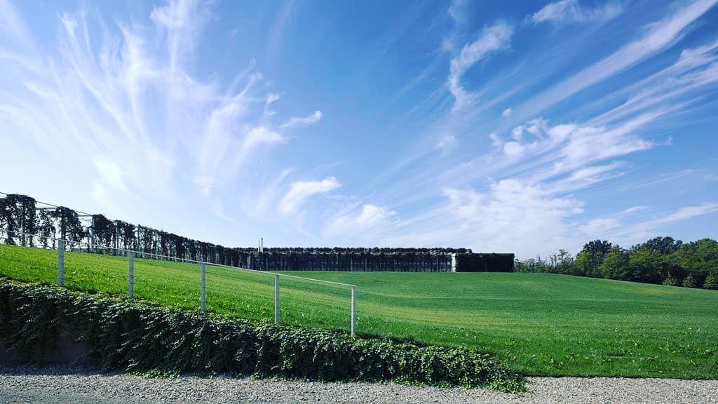 Le strutture per rampicanti che circondano il Caseificio Montecoppe a  Collecchio 4acdaa3baf4