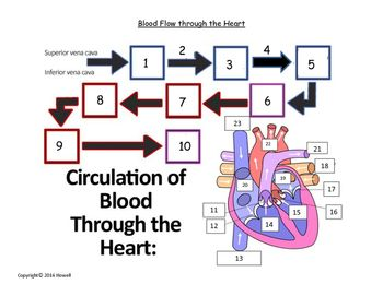 Flow of Blood through the Heart Quiz or Worksheet ...