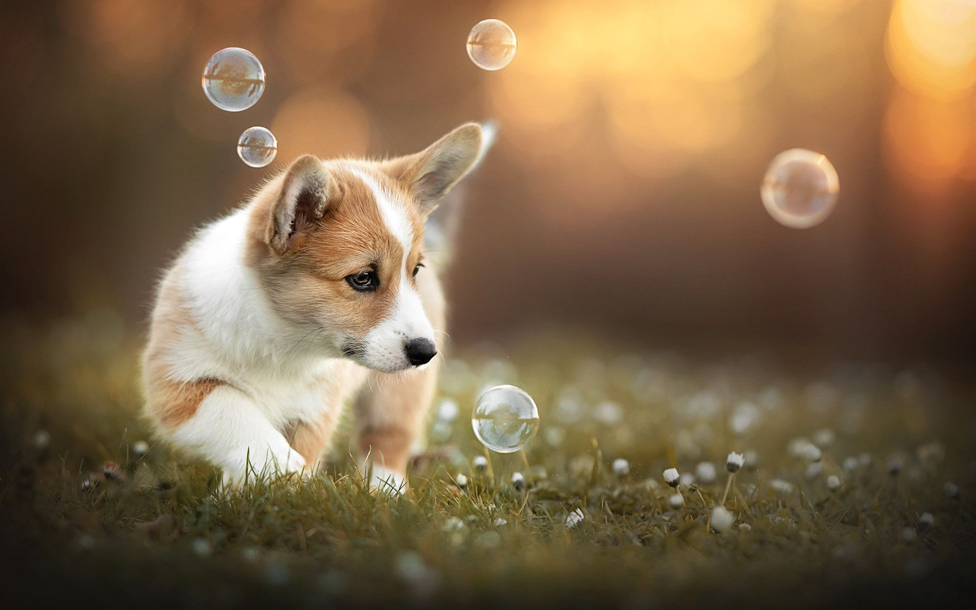 Puppy Play Wallpapers 41 Best Free Puppy Play Hd