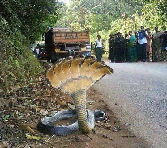Does This Photograph Show a 7-Headed Snake? | Animals, Unusual animals, Weird animals
