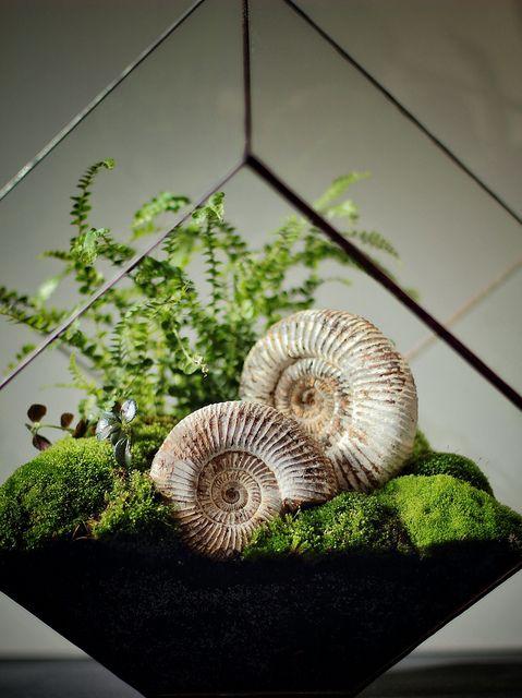 Make your own terrarium. by Ken Marten, via Flickr